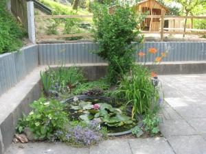 Pflanzen und kleiner Teich